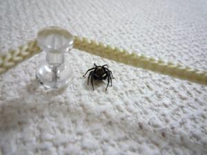 アダンソンハエトリグモ